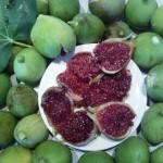 figs_5[1]