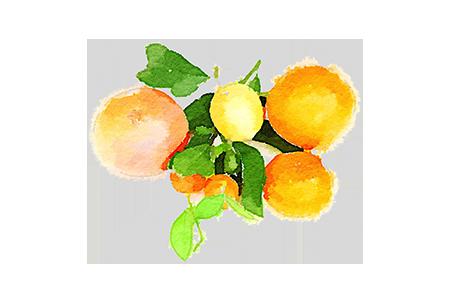 Winter citrus menu