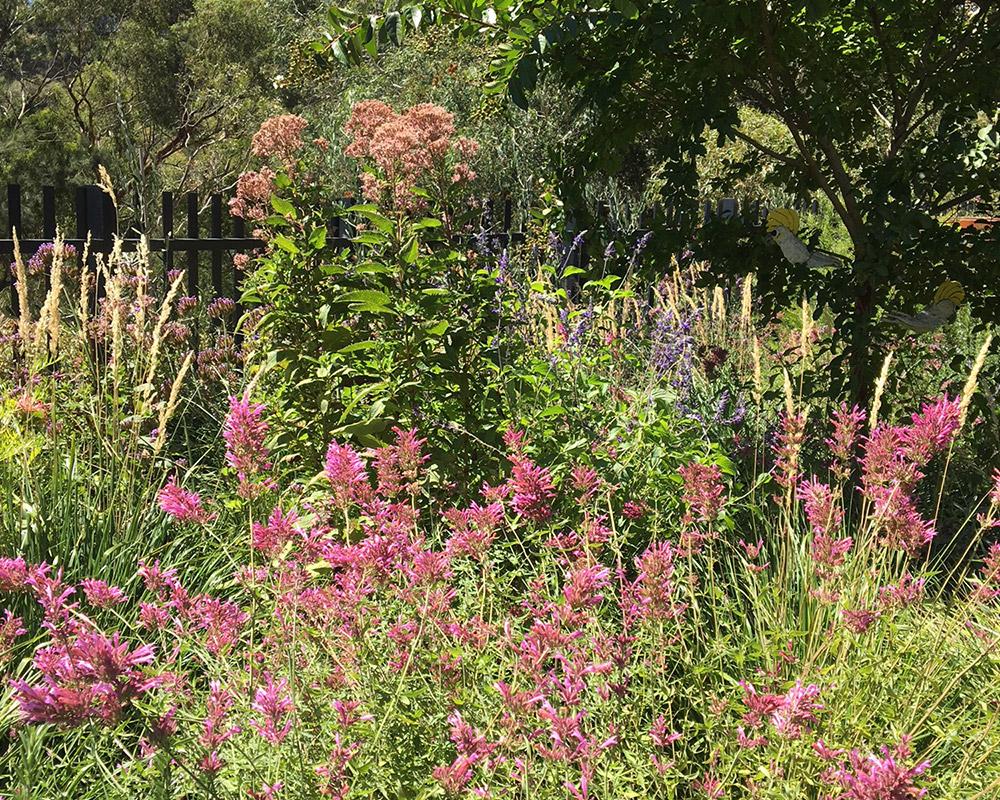 Stephanie Alexander's garden